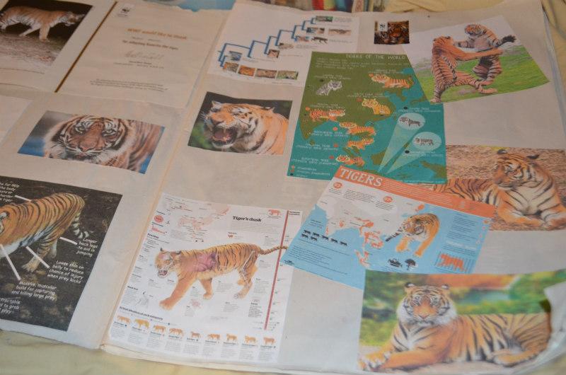 endangered-animals-tigers-5