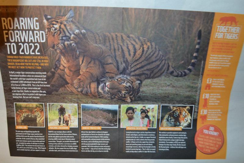 endangered-animals-tigers-6