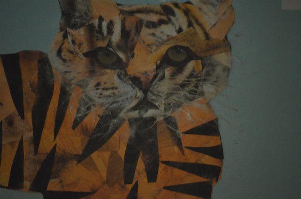 tigerrescue4